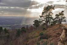 A Stark Isolated Scots Pine Tr...