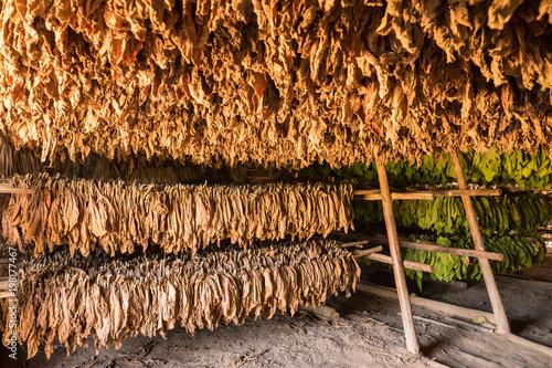 Scheune zum Trocknen von Tabakblättern im Vinales Tal in Kuba Wallpaper Mural