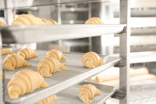 Fototapeta Trays with uncooked sweet croissants in bakery obraz