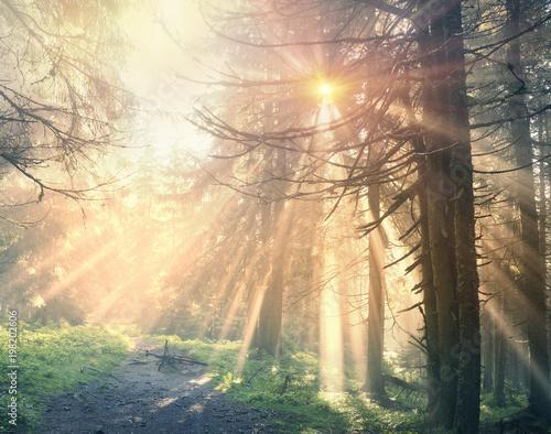 bajeczne-belki-lasu-alpejskiego