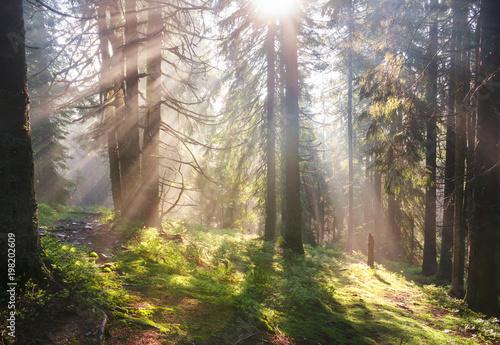 poranne-slonce-w-alpejskim-lesie