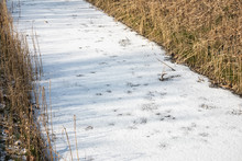 Detail Frozen Ditch Covered Wi...