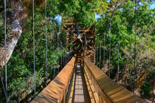 Canopy Walk In A Tropical Flor...