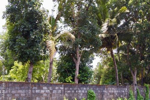 Foto op Aluminium Grijze traf. Rural India - Kerala