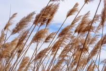 Macro Closeup Of Tall Grass Blowing In Wind