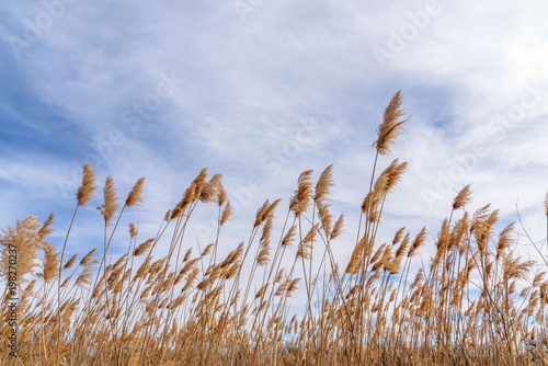 Valokuva low angle view of prairie grass blowing in the wind
