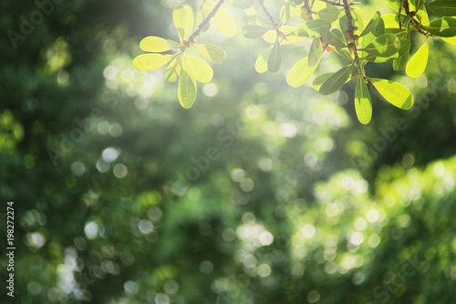 Keuken foto achterwand Bomen Green nature spring background.