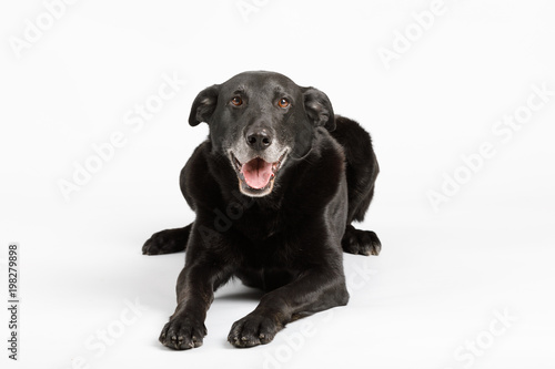 Photo  friendly and adorable crossbreed dog