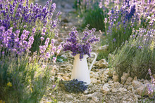 White Pot With Lavender Flower...