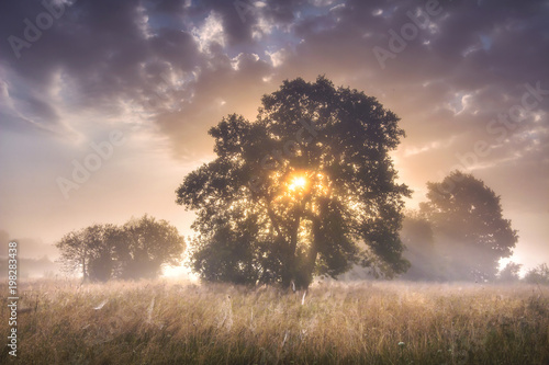 Deurstickers Zalm Summer morning landscape of large trees on meadow on sunrise with colorful sky and sun rays through branches of tree. Scenery nature on early morning. Natural rural scene outdoor with cloudy sky.