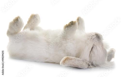 In de dag Ijsbeer aries rabbit in studio