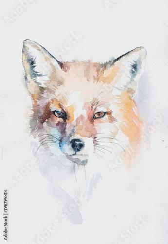 Valokuva  акварельная лиса