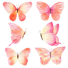 Watercolor Handmade Butterfly Set On White Background.