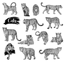 Big Set Of Hand Drawn Sketch Style Leopards Isolated On White Background. Vector Illustration.