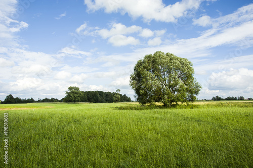 Recess Fitting Culture Tree on a green meadow and blue sky