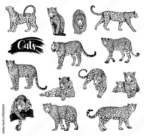 Fototapeta Big set of hand drawn sketch style leopards isolated on white background