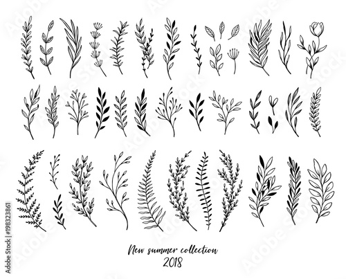 Fényképezés Hand sketched vector floral elements ( leaves, flowers, swirls and branches)