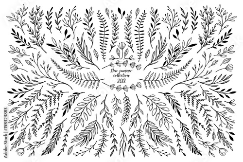 Foto  Hand sketched vector floral elements ( leaves, flowers, swirls and branches)