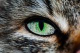 Зелёный глаз кошки крупным планом
