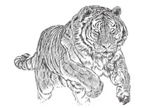 Tiger Attack Hand Draw Sketch Black Line Monochrome Vector Illustration.