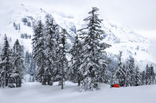 Snow Covered Trees In Forest W...
