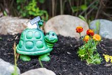 Closeup Of Happy Green Turtle ...