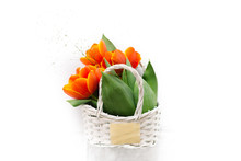 Tulips In A Basket On A White ...