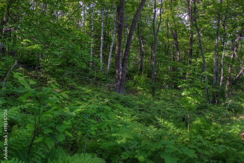 Fototapeten Wald Banning State Park in Minnesota