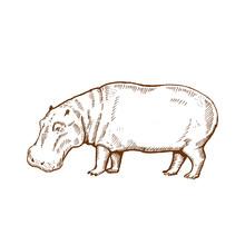 Hand Drawn Hippo ( Hippopotamu...