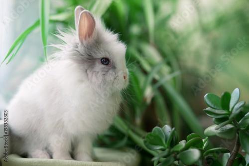 Photo white angora rabbit sits near a green bush