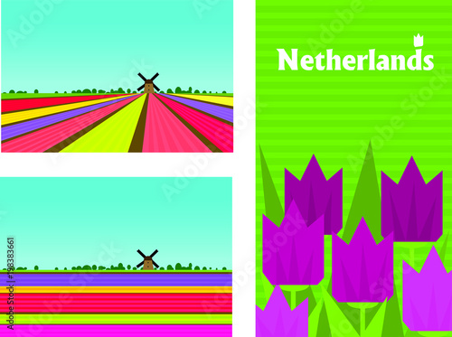 Netherland rural colorful landscape with flower (tulips and hyacinths) fields. Poster, card templates in flat style.