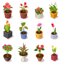 Colorful Isometric Flowers In ...