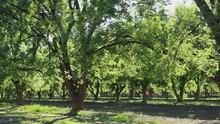 Pecan Tree Lane