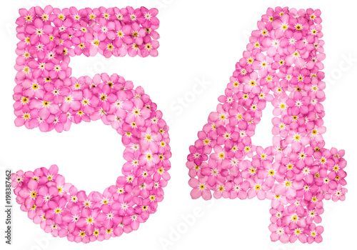 Photo Arabic numeral 54, fifty four, from pink forget-me-not flowers, isolated on whit