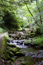 Akame 48 Waterfalls: Mysterious Scenery With Giant Trees & Huge Moss Covered Rock Formations, Untouched Nature, Lush Green Vegetation, Cascading Waterfalls & Natural Pools In Rural Japan Near Osaka