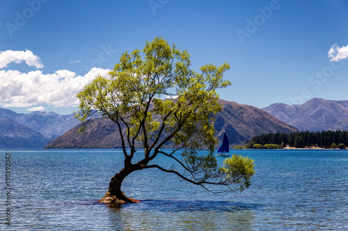 In de dag Bomen Lonely tree in a lake and a yacht in Wanaka, New Zealand