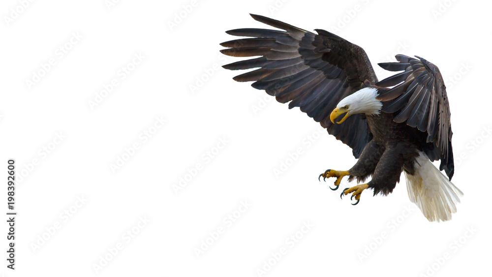 Fototapeta Bald Eagle Text Box