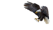 Bald Eagle Text Box