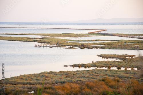 Ön alandan bitkiler, arka planda deniz manzarası. Poster