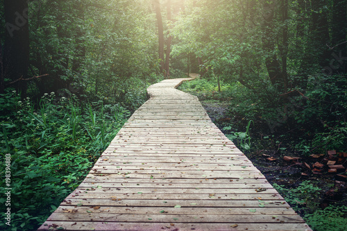 Wooden pathway through forest woods in the morning. Summer nature travel and journey concept