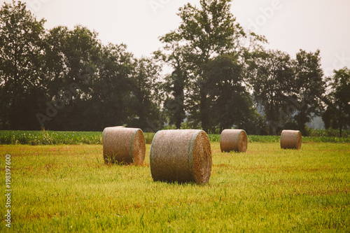 Papiers peints Vignoble Hay stack grass rolls and oak tree on the green grass field near the forest in sunny day