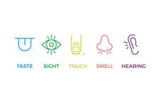 5 Human Senses Illustrations. ...