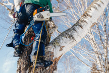 Man Sawmill Saws Tree With Cha...