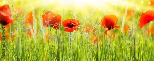 Foto op Plexiglas Poppy mohnblumen wiese panorama