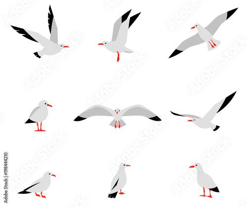 Fototapeta premium Ptaki morskie. Zestaw pięknych mew w stylu płaski na białym tle. Wektor zestaw pięknych mew.