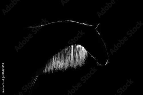 Photo White silhouette of Andalusian horse with long mane isolated on black background