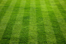 Green Grass Cuttings On The Football Field.