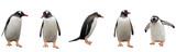 Fototapeta Zwierzęta - Gentoo penguins isolated on white background