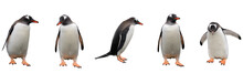 Gentoo Penguins Isolated On Wh...