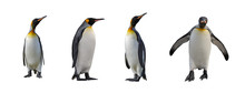 King Penguins Isolated On Whit...